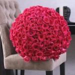 101 Роза Фридом (Эвадор)