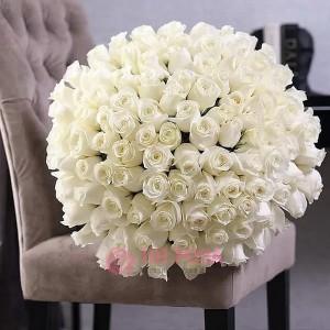 101 белая Голландская Роза
