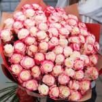 101 Роза Свитнесс (Эквадор)