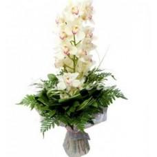 """Букет Орхидей  """"Диковинная штучка"""""""