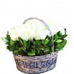 """101 Роза в корзине """"Белые паруса"""""""