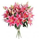 Лилия Восточная ярко-розовая