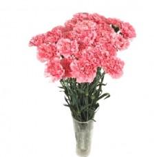 Гвоздика Одноголовая розовая