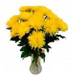 Хризантема Одноголовая желтая