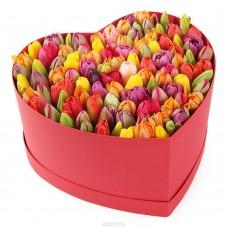 """51 Тюльпан в коробке """"Рим"""""""