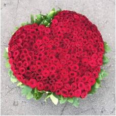 "301 Роза ""Красная королева"""